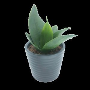 Snake Plant in a grey ceramic pot